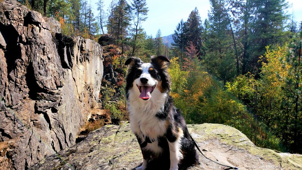Picture of Mika in the mountains.